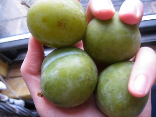 Fresh Green Plums