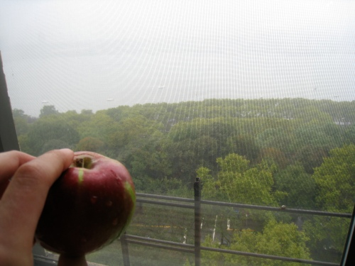 Foggy Apple