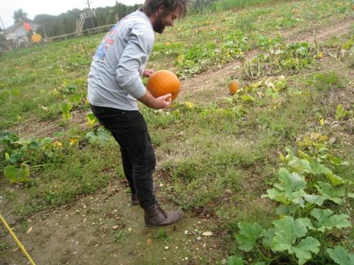Pumpkin picking 2