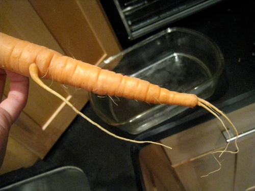 Funny carrot